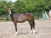 216-2012-colt-by-royal-classic-out-of-a-sandro-hit-mare-bobilis
