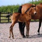 John Barlow Horses
