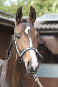 187-2012 Colt by Royal Classic out of a Sandro Hit mare (Bobilis)